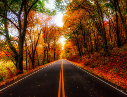 Fall Leaves Road Trip